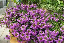 Kert & Virágok / Garden & Flowers / .