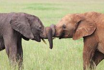 Elephants!! / by Kelly Rowe