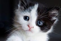Koty na zdjęciach