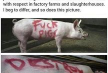 Go Vegan......because this is the other option