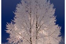 Trees. Arbres.