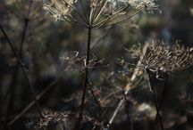 rośliny szemrajfotografi