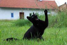 Animals & wildlife free stock photos