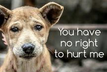 save beautiful animals from suffering