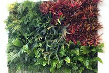 Jardins Verticais / Jardins verticais que tenho feito para clientes do Rio de Janeiro e de São Paulo