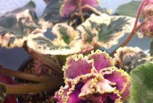 My Violets / My violets!!! :) enjoy!!!