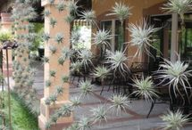 air plant et suspensions
