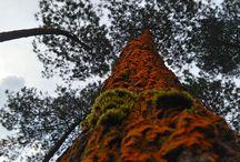 Nature / Fotografi