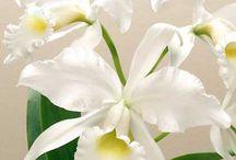 Flori decorative.