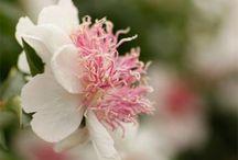 kingston flower farm