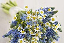 花 植物❤