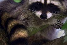 Small & Furry Wildlife / by Cheryl Morgan