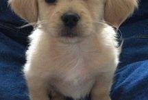 Puppies!:)