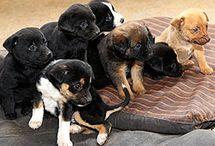Puppies / Klein