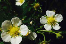 Tuinieren / Leuke planten en bloemen voor jouw tuin