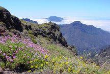 La Palma Rondreis / Afwisselende rondreis op La Palma door 5 verschillende klimaatzones en meer dan 1000 verschillende microklimaatjes. Laurierbossen, stranden, baaitjes, authentieke dorpen, stadjes en vulkanen.