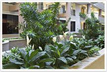 Interior Plantscaping & Installations / As our exterior landscape maintenance welcomes you at the edge of your properties, and escorts you inside the building, you are then greeted by the splendor and colorful display offered by our Interior Plant Maintenance and Installation Division.