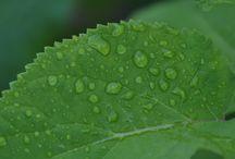 Natuur foto´s / Verschillende foto´s van Dennisvisser.info