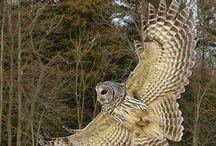 Amimais e Aves de Edábio de