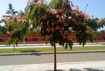 arboles en las veredas