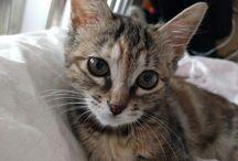 子猫のフレイア / 子猫のフレイア 2016年4月26日にマンションの植え込みに落ちていた所を拾われました。その時点で推定生後1週間~10日。 毎日元気にしております。