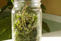 Herbs remedies / Herbs