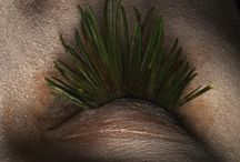 PHOTO SHOOTING   pinetree