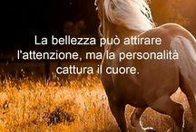 c cavallo aforisma