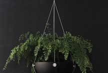 Arbor Planter / The New Arbor Planter by Alex Buckman Studio.