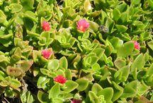 Fleurs et plantes d'extérieur
