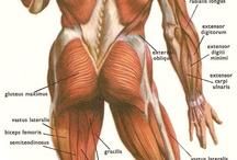 Anatomy / anatomy references