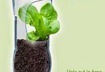 kreativitás és növények