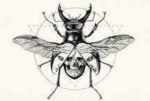 Illustrations - Entomology