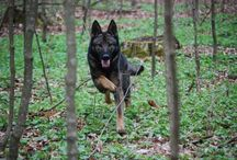 Working line GSD