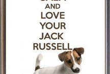 I Love My Jack Russell!!