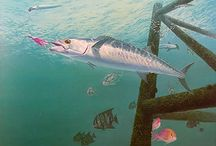 Kingfish Paintings