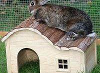 Just for Your Rabbit / Treat your bunny to something fun!