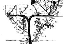 сад/огород