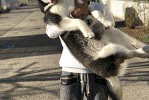 Fashion | dogs lover | cute boy |