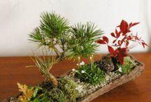 Jardineria / Jardines