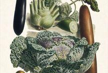 Esprit botanique / Les herbiers, les planches botaniques, les jolies compositions qui révèlent, en détail, la magie du végétal... L'esprit botanique, on adore ! #botanique #herbier