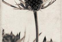Flora Photographica