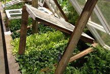 Cold Frames for the Veggie Garden