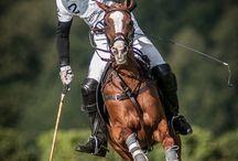 horse polo / horse polo