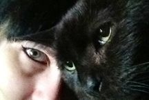 ^^ Cats ^^