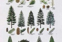 Plants - Trees