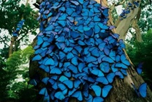 Butterflies / by Sharon Horbyk