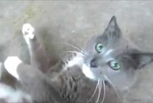 funny cats videos - funny cats compilation / Its all about Funny cats and other pets animals funny and crazy activities videos its fun watching these videos