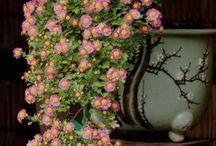 beautiful flowers / flowers