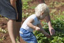 Растения и дети / Выращиваем растения вместе с детьми